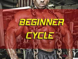 Steroid Cycle for beginner