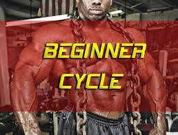 Best Novice Steroid Cycle