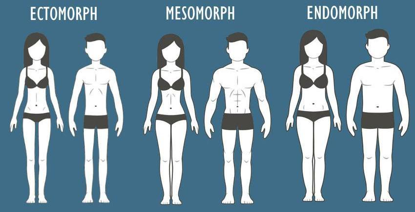 Ectomorph Body Type Nutrition
