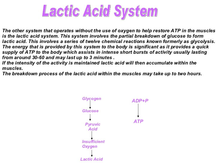 How Lactic Acid Works