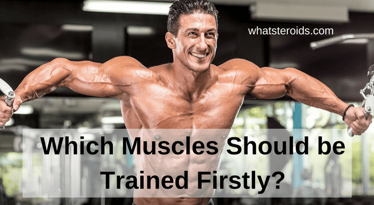 Which Muscles Should be Trained Firstly?