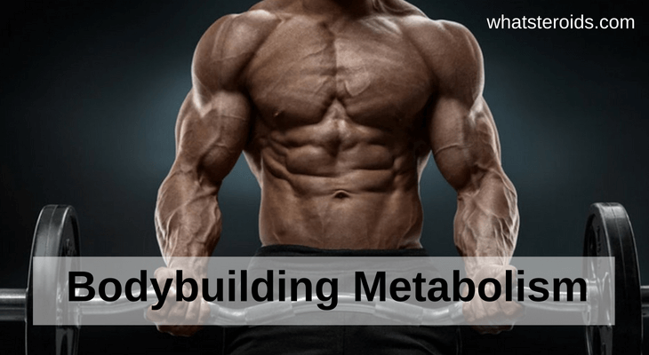 Bodybuilding Metabolism