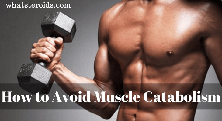 How to Avoid Muscle Catabolism?