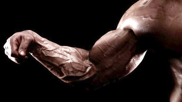 -Forearms are not so small as it is considered