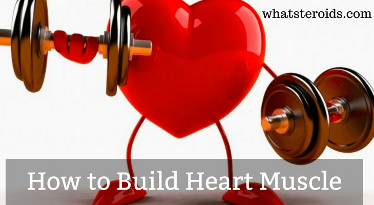 How to Build Heart Muscle