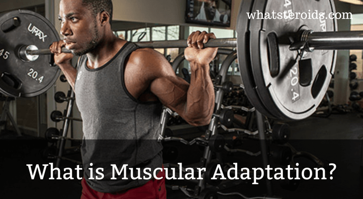 What is Muscular Adaptation?