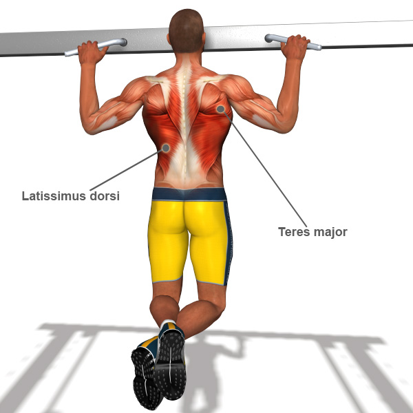 Back Exercises l How to strengthen back muscles