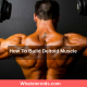 How To Build Deltoid Muscle