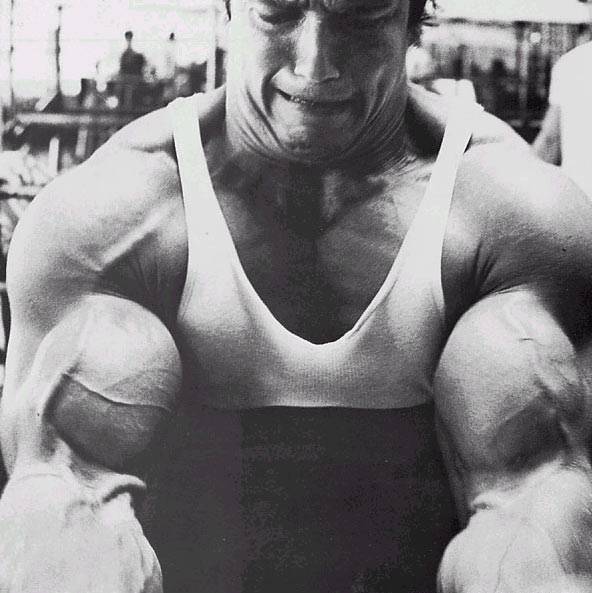 arnold curls Preacher bench curls for working biceps