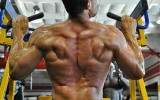 back muscle