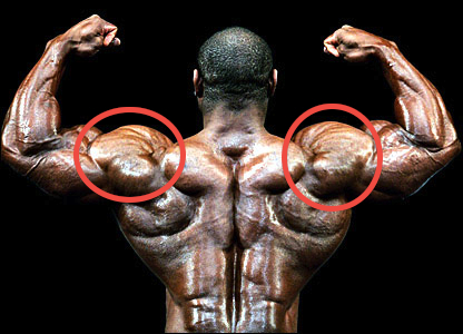How To Build Deltoid Muscle - What Steroids