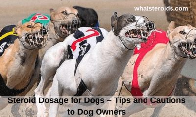 Steroid Dosage for Dogs – Tips and Cautions to Dog Owners