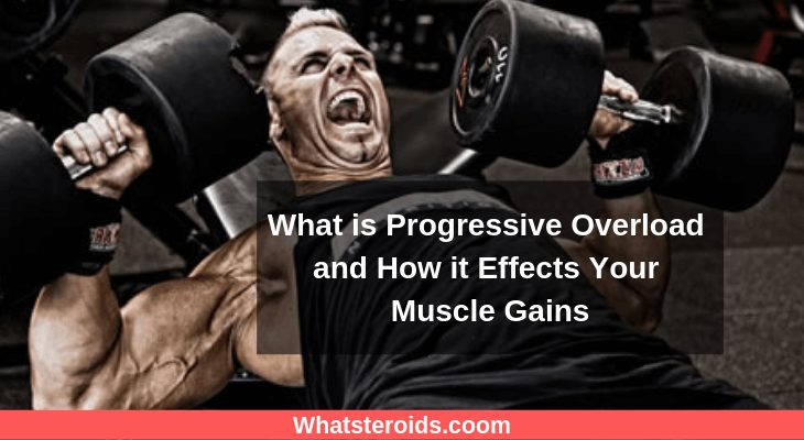 What is Progressive Overload and How it Effects Your Muscle Gains