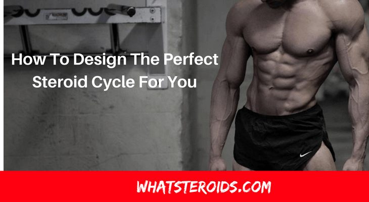 How To Design The Perfect Steroid Cycle For You