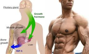 HGH as Natural Hormone:
