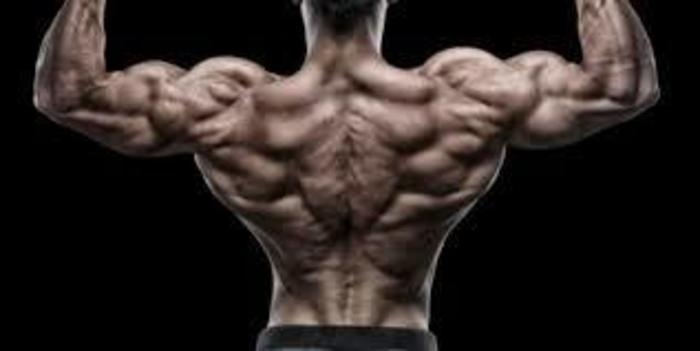 What Else You Need to Build a Solid Back Muscle?