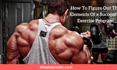 How To Figure Out The Elements Of a Successful Exercise Program