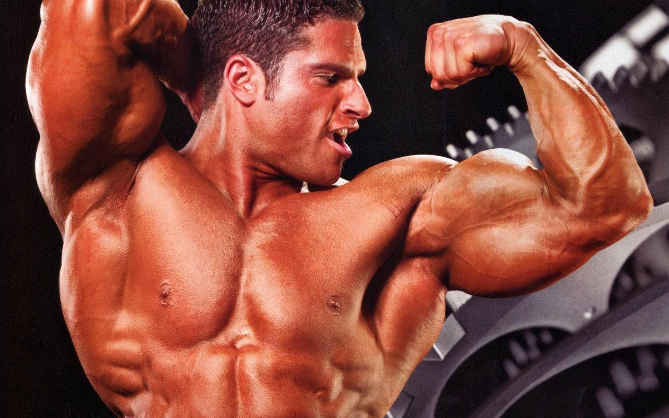 Muscle Building Fat Cutting Supplements