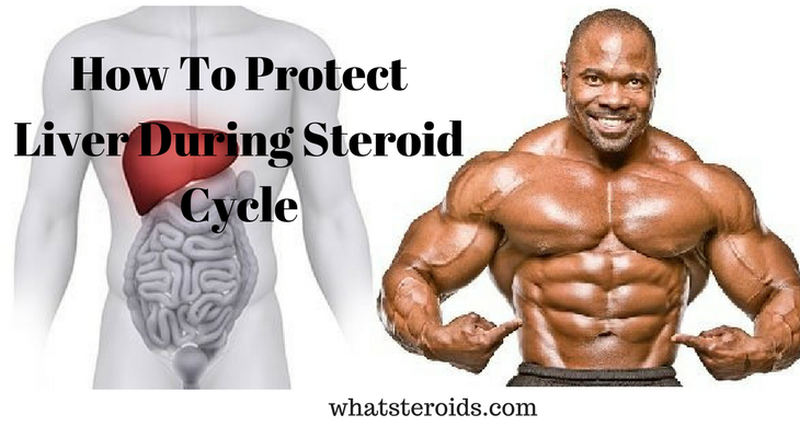 How To Protect Liver During Steroid Cycle