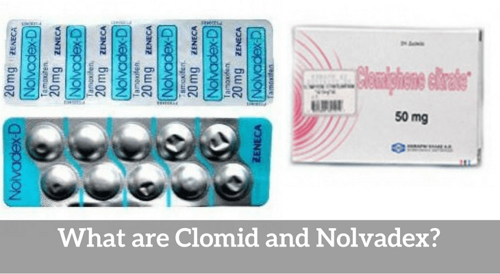 What are Clomid and Nolvadex?