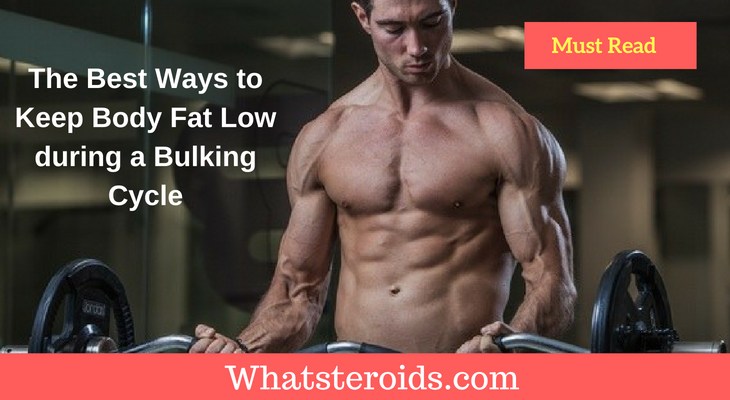 The Best Ways to Keep Body Fat Low during a Bulking Cycle