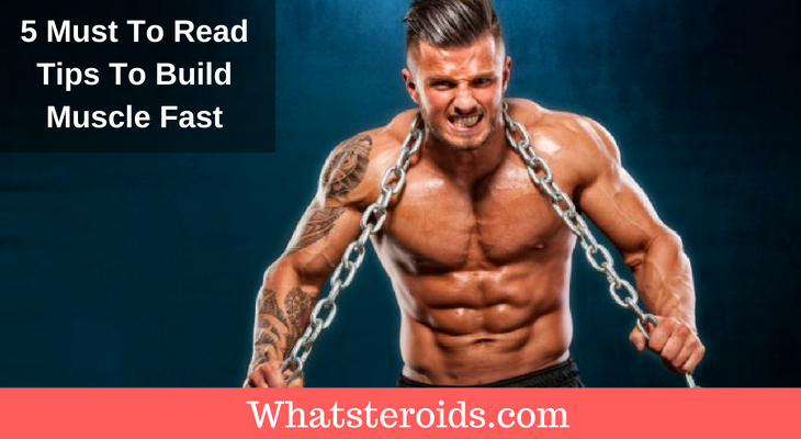 5 Must To Read Tips To Build Muscle Fast