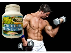 Increase muscle mass, as well as sex drive and erections.