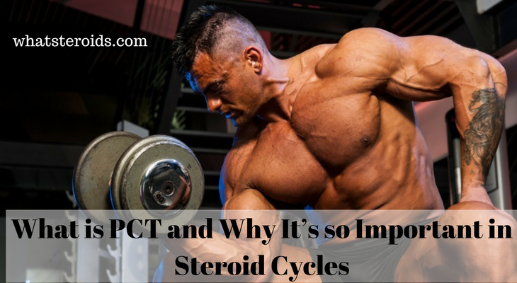 What is PCT and Why It's so Important in Steroid Cycles
