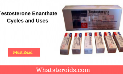 Testosterone Enanthate Cycles and Uses