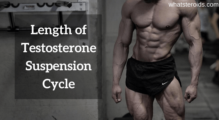 Length of Testosterone Suspension Cycle