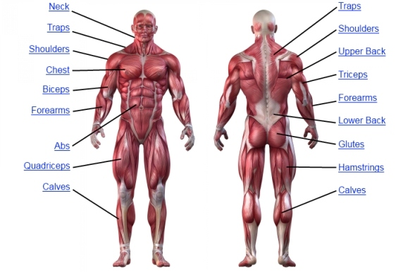 Inject Anabolic Steroids in Body