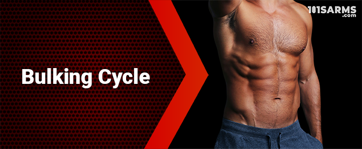 The Bulking Cycle