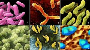 Types of Germs: