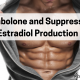 Trenbolone and Suppressed Estradiol Production
