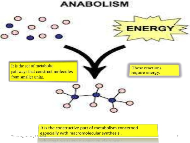 Introduction to Anabolism:
