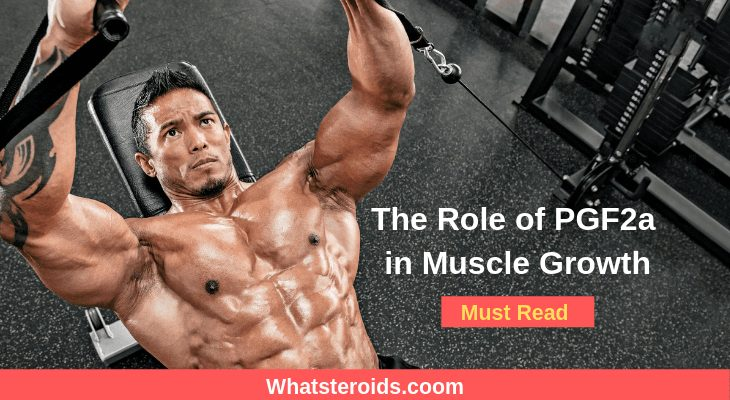 The Role of PGF2a in Muscle Growth
