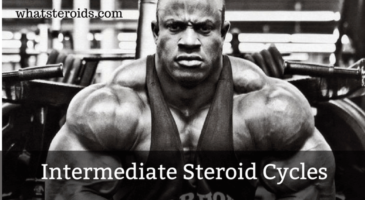 Intermediate Steroid Cycles