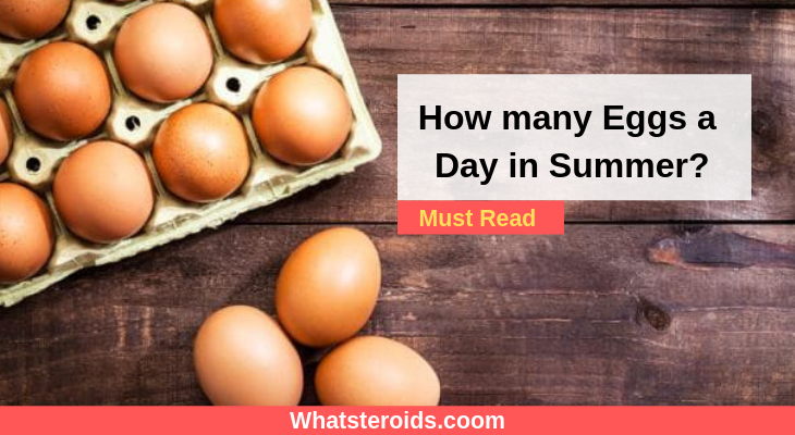 How many Eggs a Day in Summer?