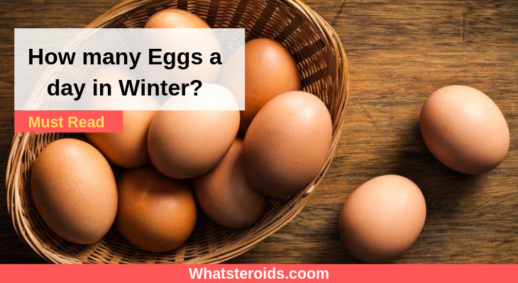 How many Eggs a day in Winter?