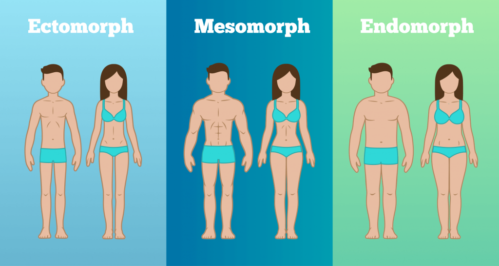 Know The Body Type